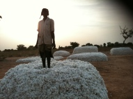 Filming cotton production in Africa